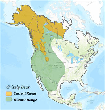 Map showing historical and current grizzly bear range in North America.